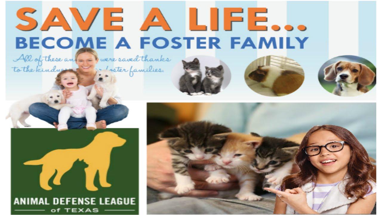 Animal Defense League Of Texas Pet Friendly Sites