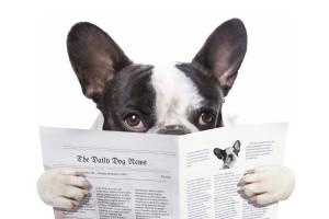 Daily Pet News