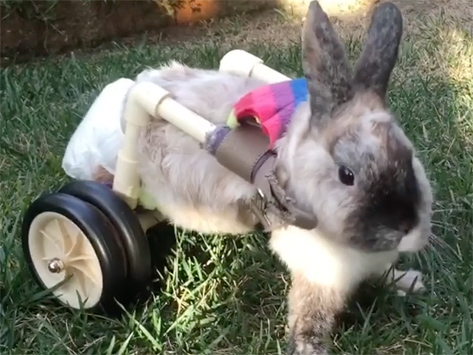Abandoned, Injured Rabbit Gets the Help She Needs