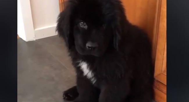 Newfy Lovers: This Video's For You!