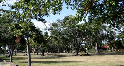 Miami Dog Parks