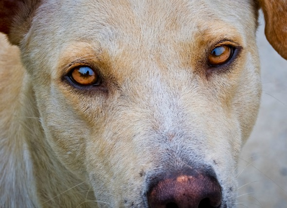 Involuntary Eye Movement In Dogs