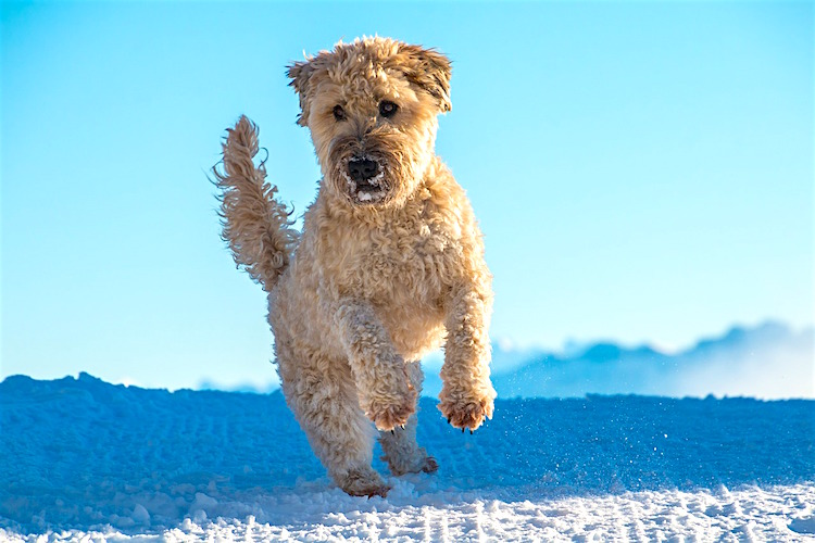 A Veterinarian's Top 10 New Year's Resolutions - Petful