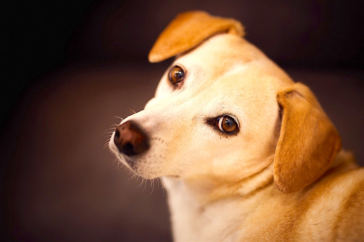 All About Blood Transfusions in Pets - Petful
