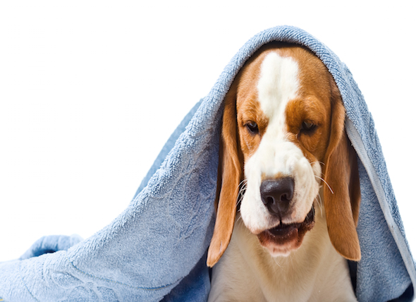 Bilious Vomiting Syndrome in Dogs
