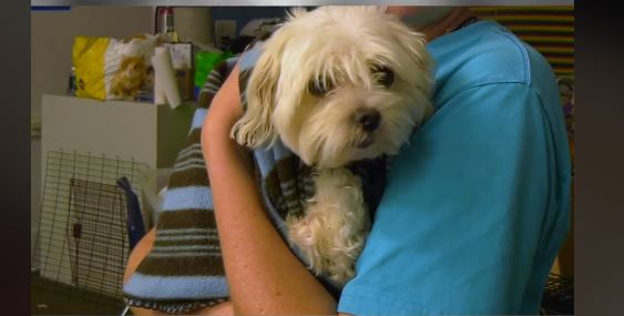 Rescuers kick in door to save stranded dog - Life With Dogs