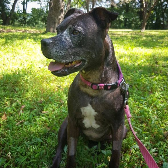Tala loves kids, cats, dogs ... and the idea of a forever family. Let's find her one! - Life With Dogs