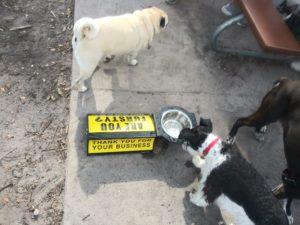 Pop Stops for Pets, P4P, P4P Petfriendlysites, PetFriendlysites.com